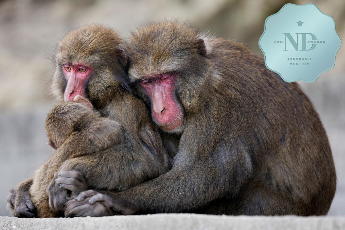 Love of the Macaques